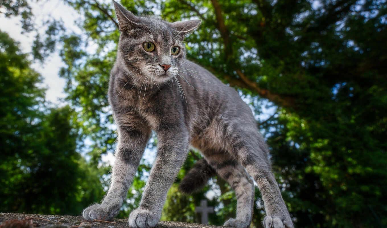 кот, котенок, kitty, котейка