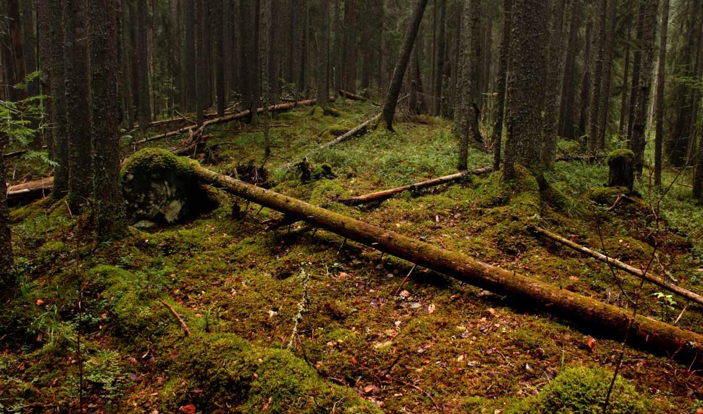 дерево, лес, povalit