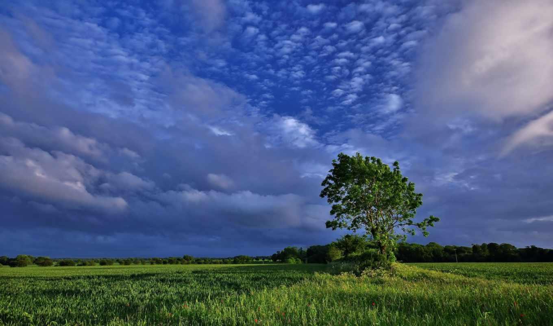 дерево, поле, облака, природа, картинка, картинку, смотрите, кнопкой, мыши,