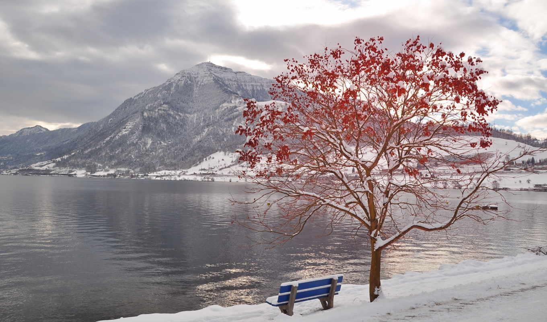 красивые, осень, природа, октябрь, взгляд, пепельный, нов,