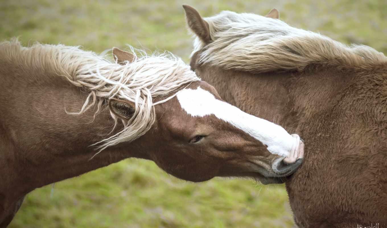 лошади, лошадь, pair,