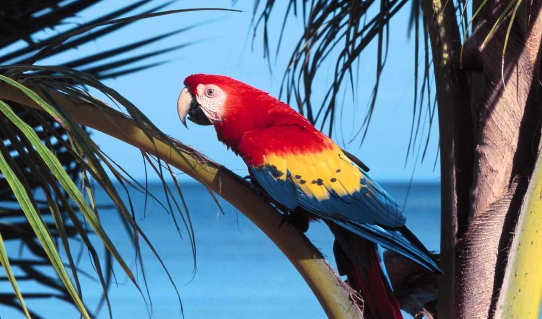 птицы, красивые, самые, экзотические, птиц, world,