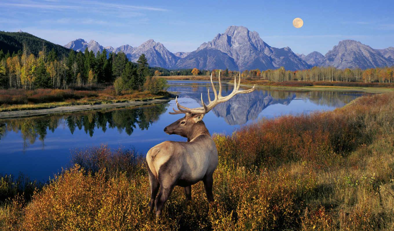 рога, олень, природа, пейзаж, луна, река, озеро, деревья,