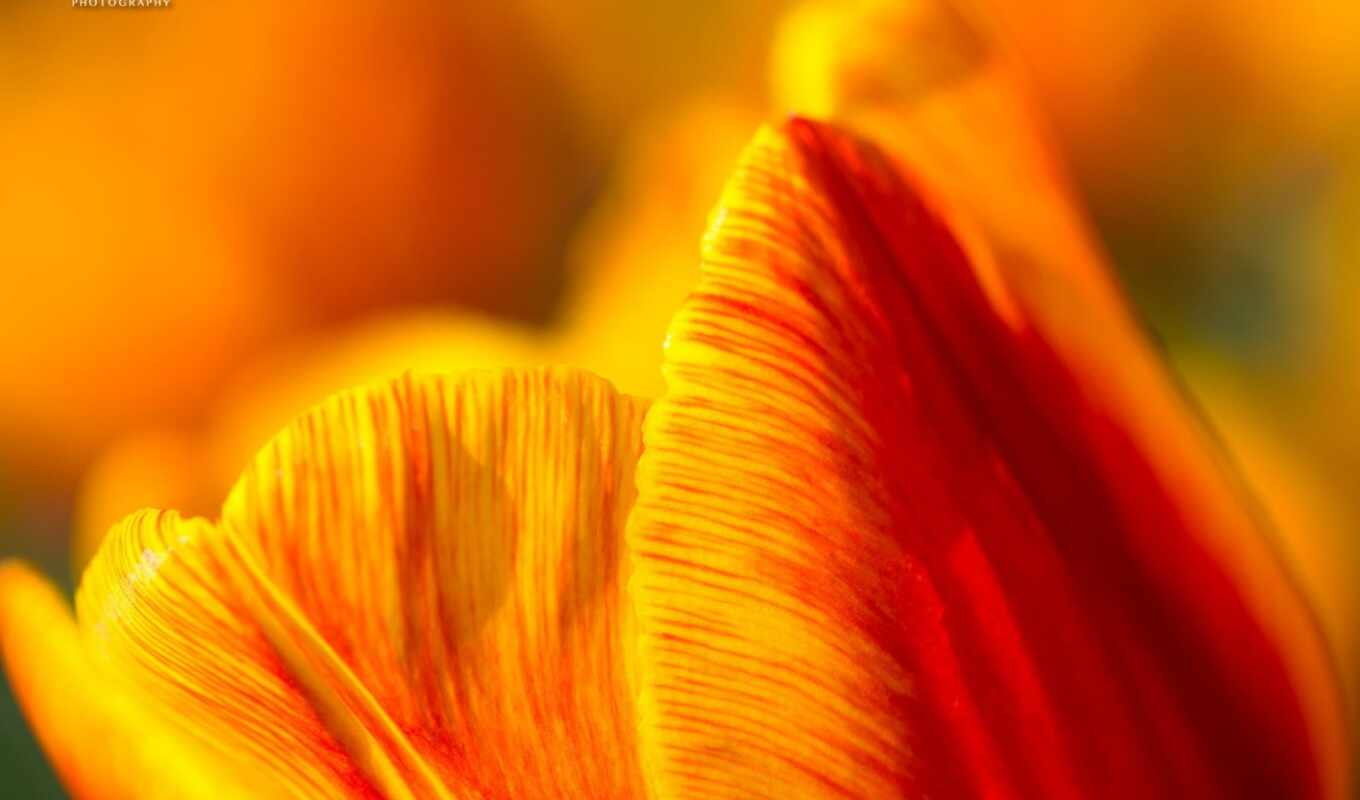 flower, macro, yellow,
