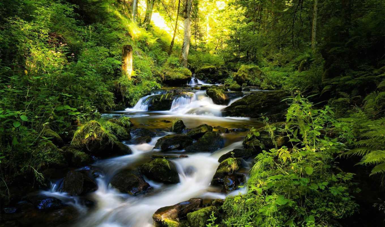 водопад, лесу, лес, тропинка, река, деревья,