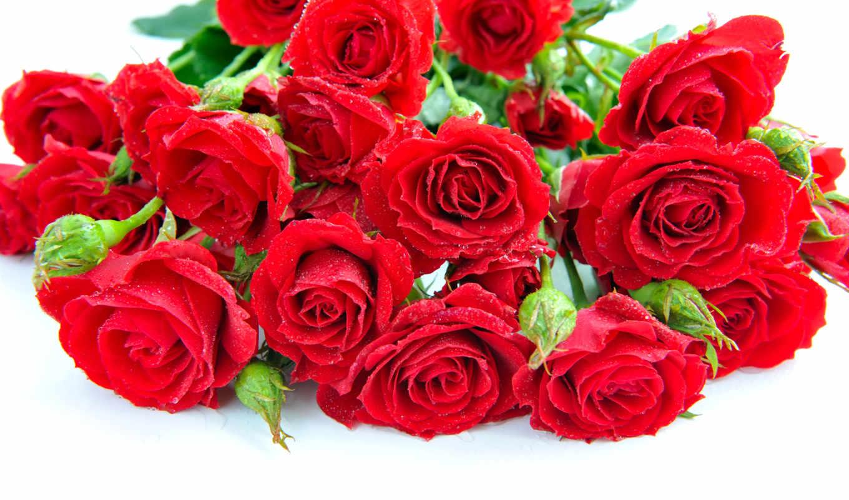 розы, букет, красные, цветы,