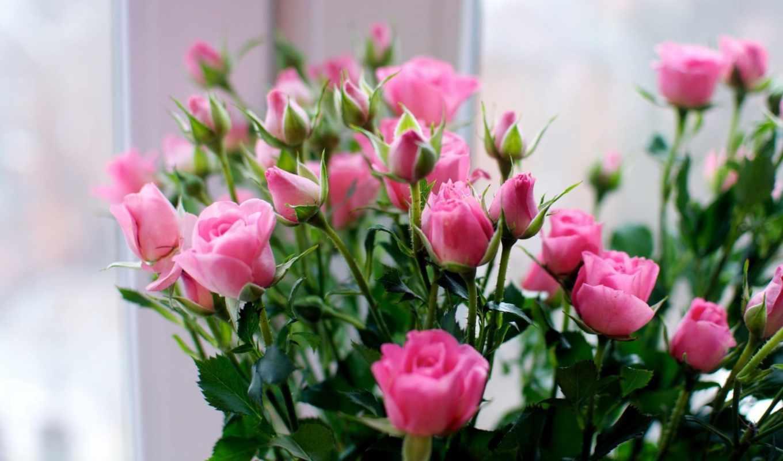 розы, маленькие, букет, взгляд, цветы,