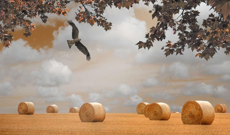 falcon, поле, осень, сено, zhivotnye,, пейзажи, ветки, landscape, природа, птица,