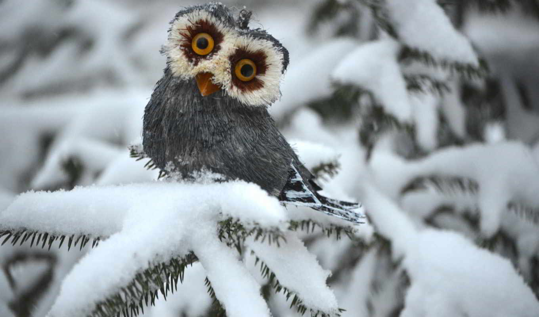 сова, winter, ёль, white,