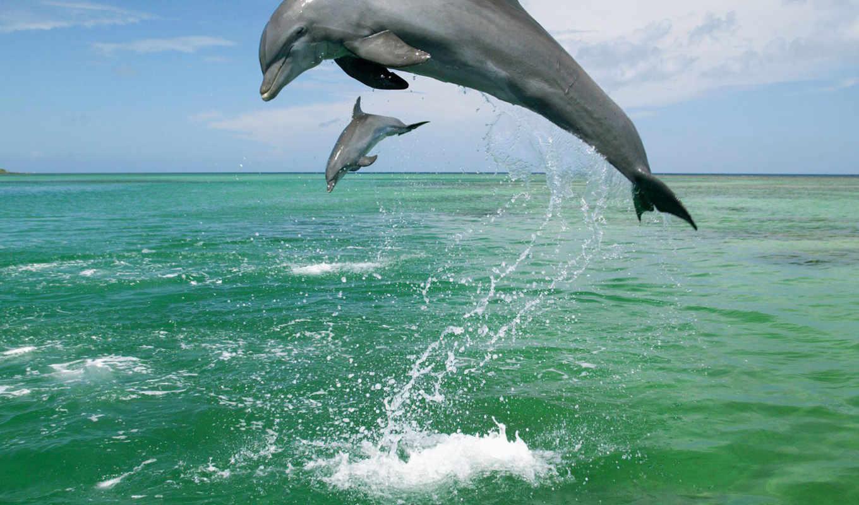 дельфины, прыгающие, февр,