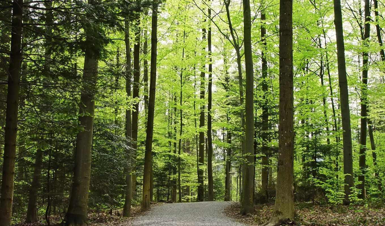 лесу, leto, цветок, шиповника, les,