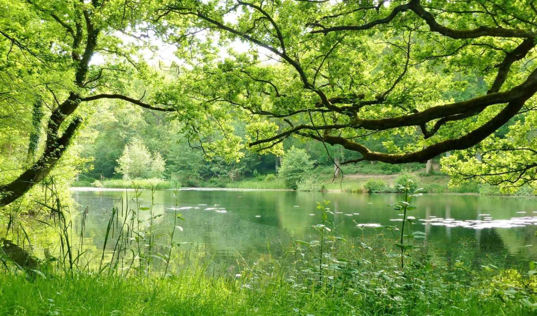 природа, лес, trees, природы, размеры, мм, landscape, страница, reservoir,