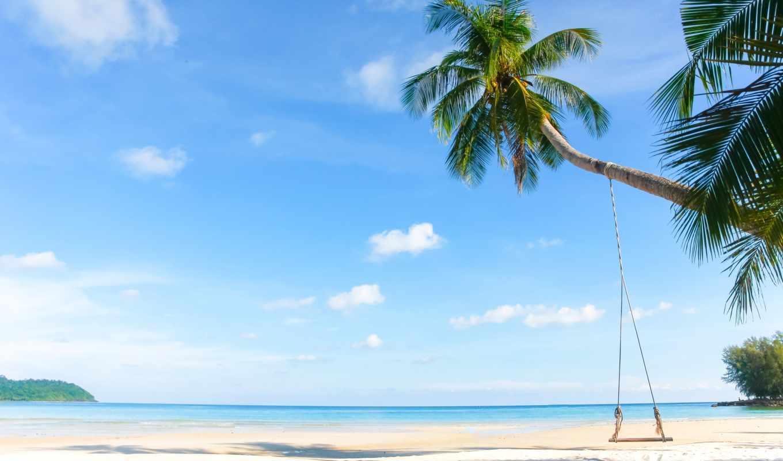 oyster, море, пляж, palm, công, косметика, professional, lũng, phòng, tropical, песок