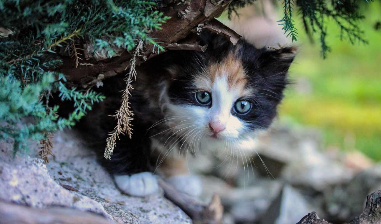 котенок, jigsaw, кот, puzzle, free, kitty, ilyes, online, kitt