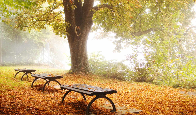 осень, природа, парк, дерево, листва, лавки, hintergrundbilder, naturpark, herbstlaub, картинка,