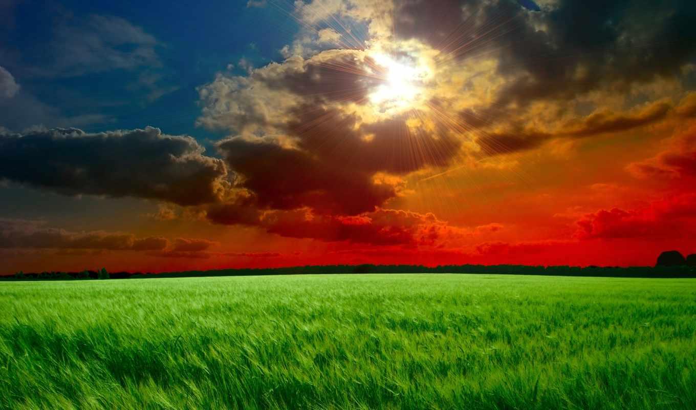 небо, облака, поле, лучи, солнце, закат, тучи, колосья, трава, resimleri, зеленые,