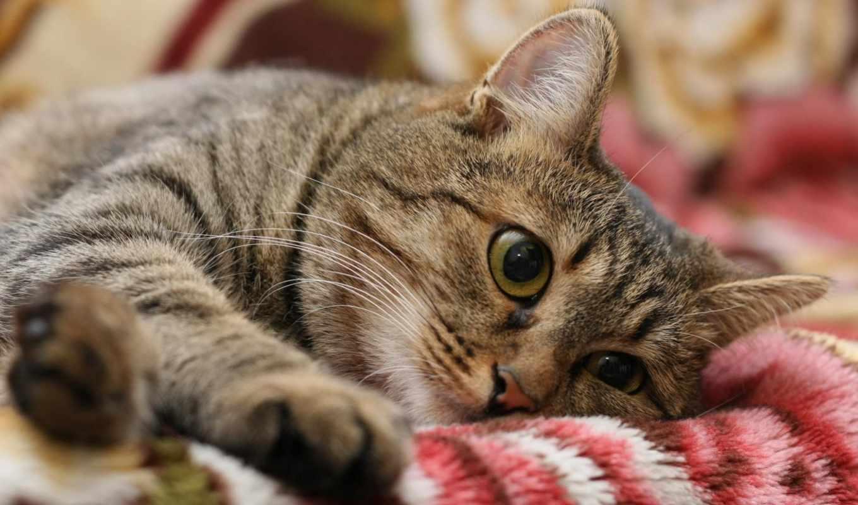 кот, грусть, настроение, картинка,