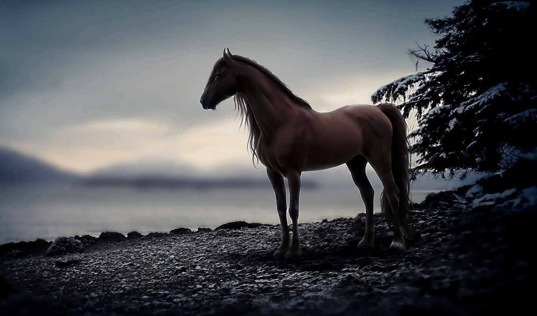 лошади, лошадь, коллекция,