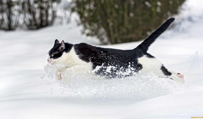 кот, бежит, winter, снег, jaguar, кошки, картинка, ctambako, drift, снежные,