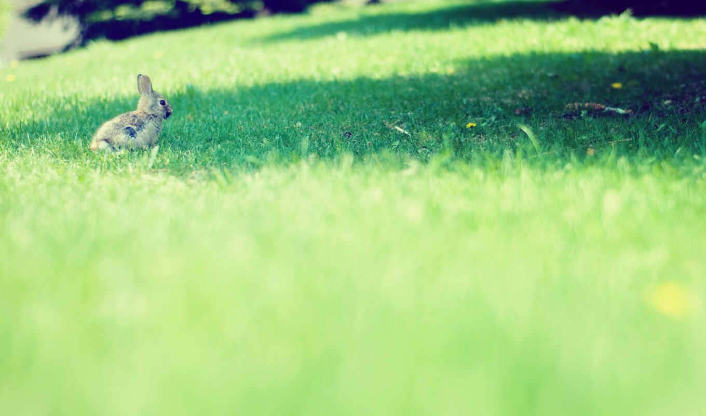 поле, bunny, трава, природа, газон, качество, кролик, tavşan, art, depth, iman