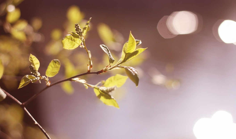 макро, листья, free, природа, winter, best, мар, зелёный,