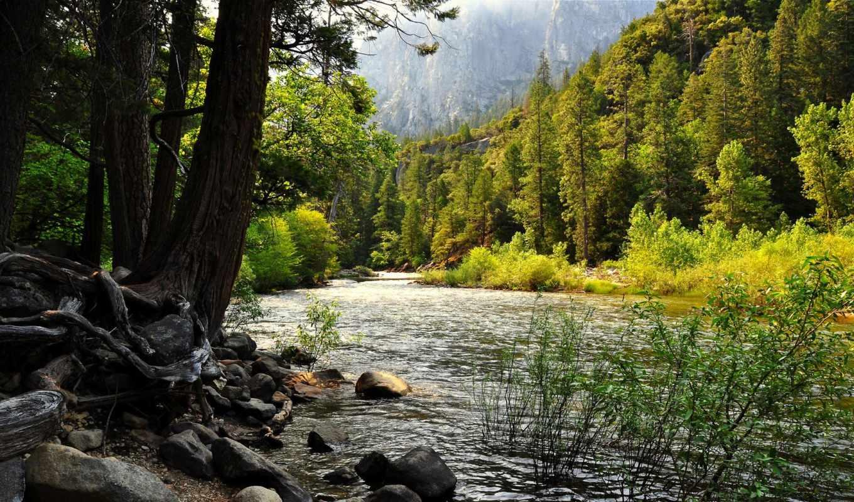 река, лес, woods, trees, природа, rivers, гора,