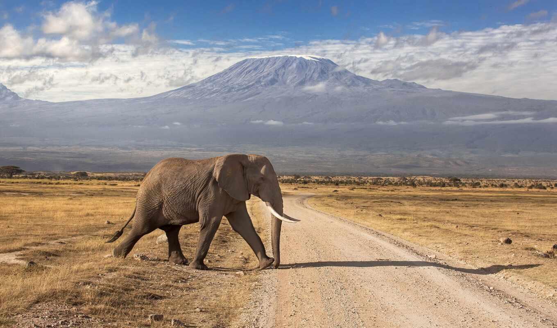 kenya, rook, танзания, safarit, parok, день, африка, mara, masai, national, программа