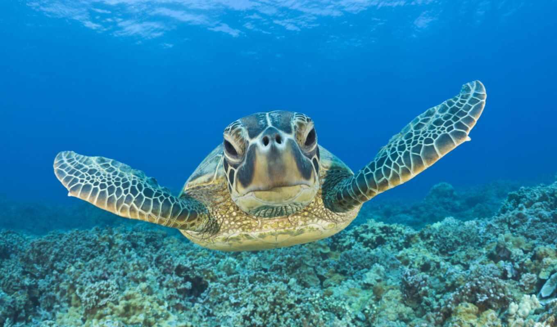 черепаха, взгляд, море, side, million