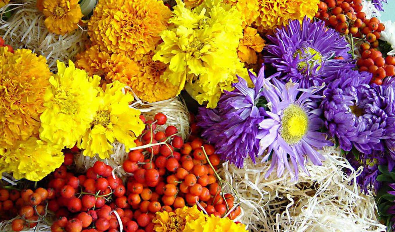 flowers, flower, сборник, отличных, oboi, подборка,