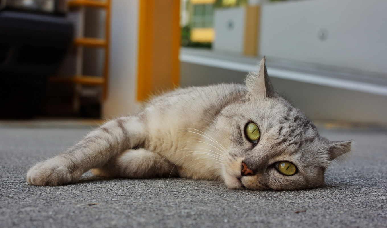 отдыхает, кот,
