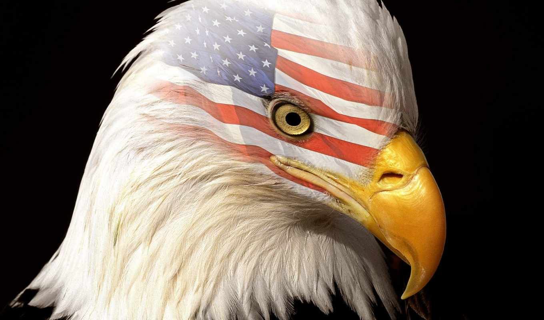 америки, черном, американский, символ, символы, орлан, fone, usa,