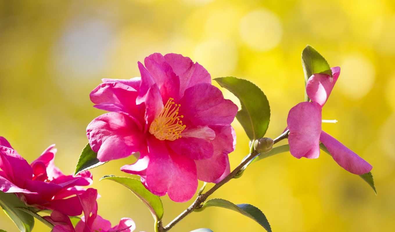 samsung, цветы, galaxy, свободно, everything, хороший, you, explore