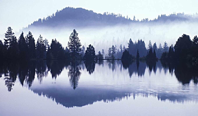 утро, песнь, sound, soft, лес, отражение, water