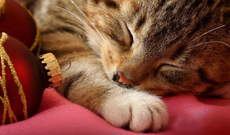 спит, год, новый, cats, котенок, animals, котик, животные, картинка,