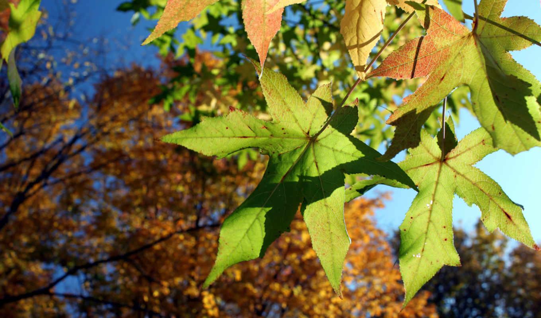 осень, природа, лес,