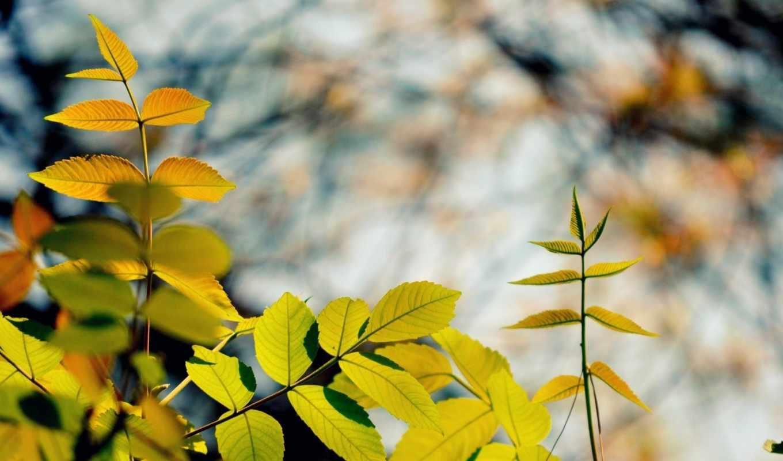 osen, priroda, листья, ветви, яркие, ветки, makro,