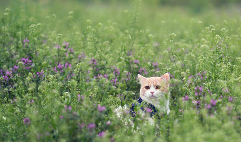 кот, траве, трава, тюлень, сидит, котенок, torode, за, fone,