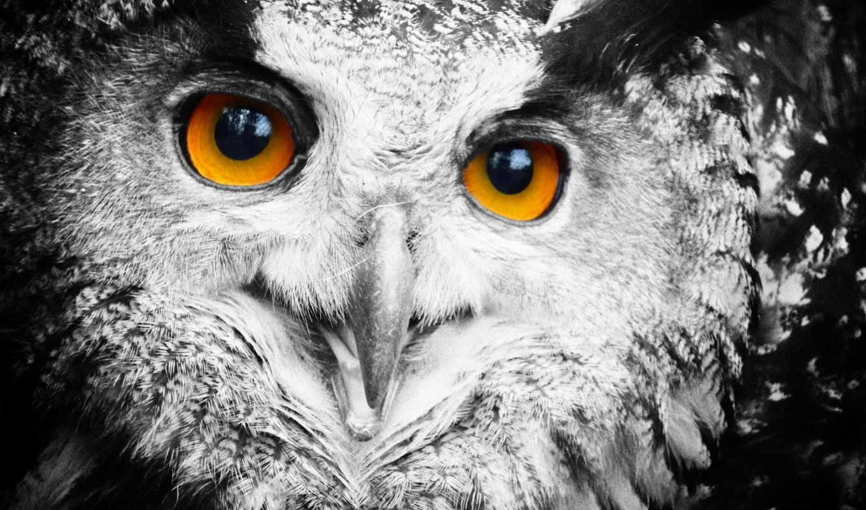 филин, сова, перья, свет, птица, zhivotnye,