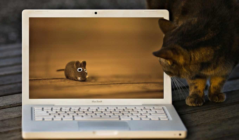 кот, котенок, toy, ноутбук, компьютера, apofiss,
