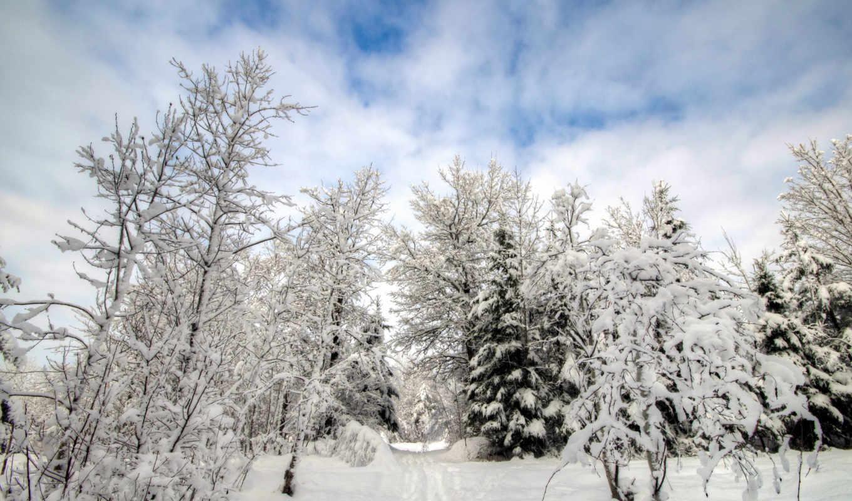 new, снег, winter, год, gambar, елка, salju, hutan, dingin, musim,