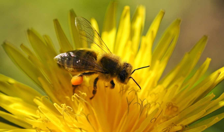 petals, flowers, пчелка, gratis, colorful