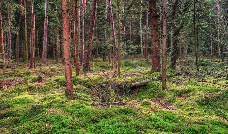 лесные, лес, природа, заставки, красивые, пейзажи -,