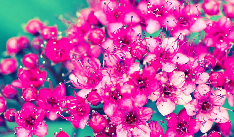 Россыпь цветов  № 2267706 без смс