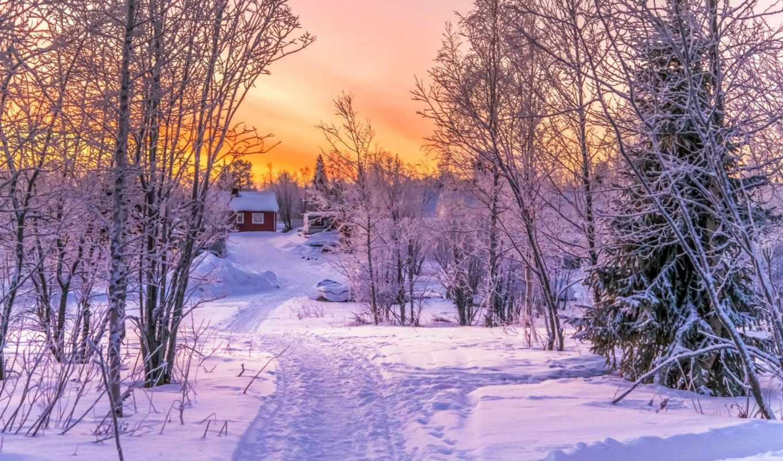 winter, wonderland, снег, природа, выгул, январь, trees,
