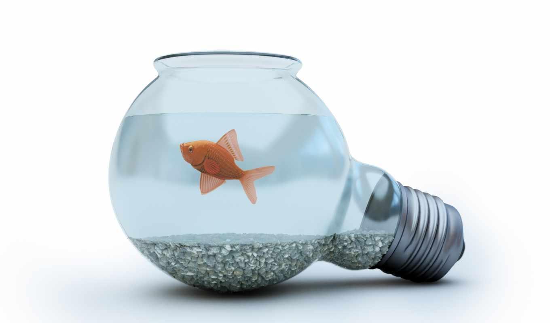 bulb, goldfish, light, with, activités, blue, des, concept, photo,