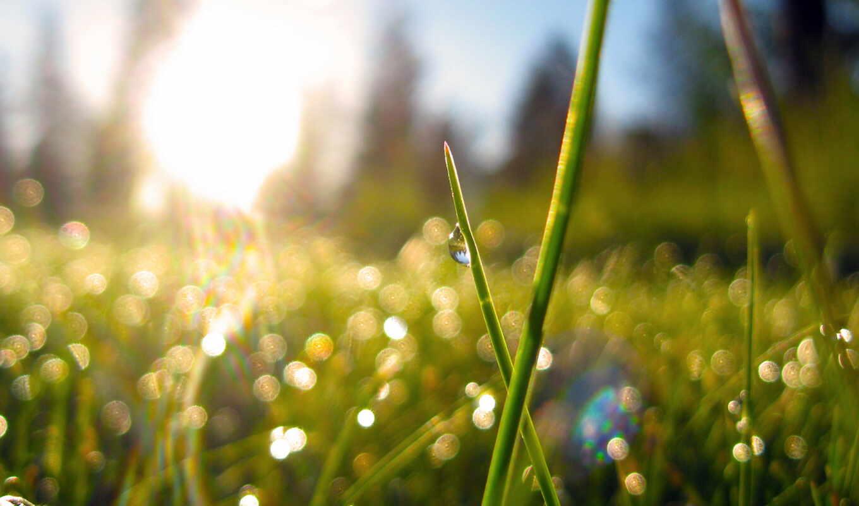 утро, природа, трава, sun, роса, растения, высоком, разделе,
