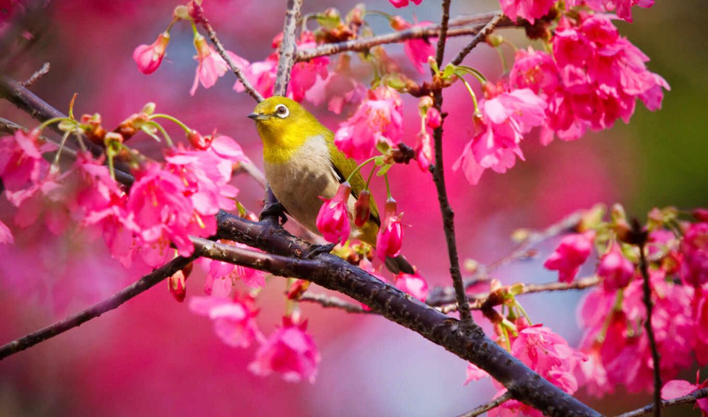 parede, papel, pássaros, cerejeira, aves, papéis,