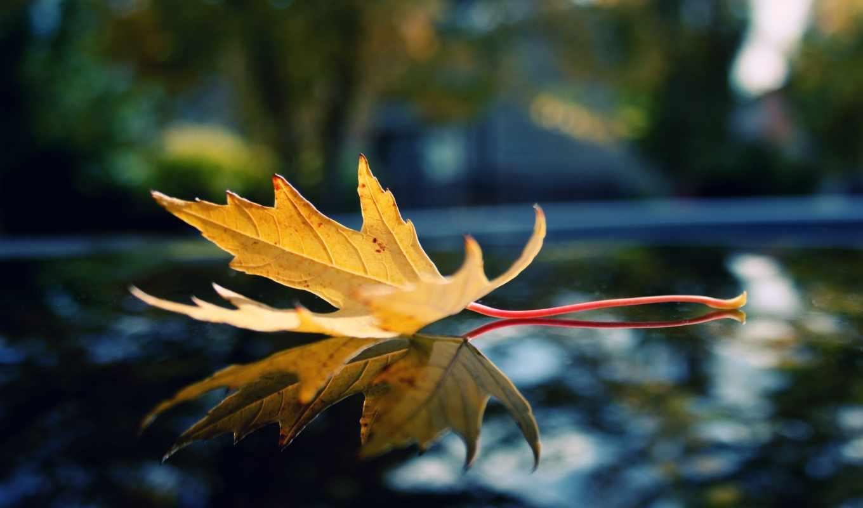Опавшие желтые листья  № 1359360 загрузить