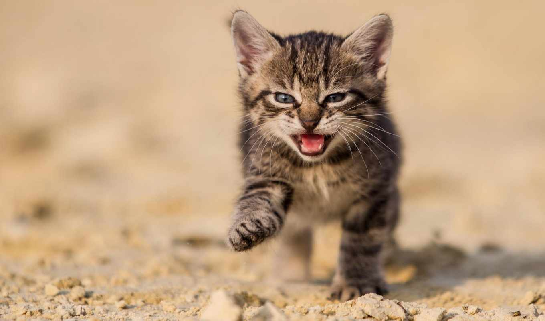 фотограф, кот, кошки, котенок, разных, small, траве, открытым, бежит, ртом,