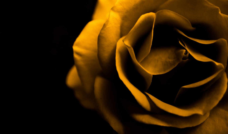 взлёт, gold, black, cool, red, фото, билайн, роза, фон, туроператор
